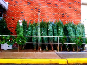 Pick a tree. Any tree.